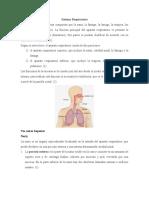 Sistema o Aparato Respiratorio
