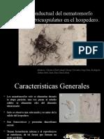 Control conductual del nematomorfo Paragordius tricuspidatus en el hospedero.