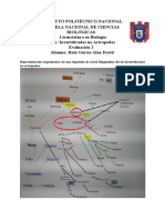 Propuesta filogenetica Gastrotricha.pdf