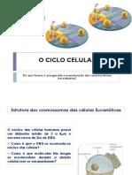 CICLO-CELULAR_b7b7b282b59c83bc8c771d78c022c5ab