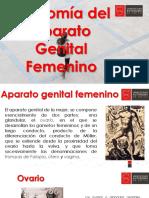CLASE 1 Anatomi´a genital femenina