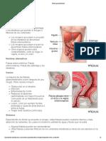 Fístula gastrointestinal