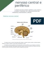 aula 03 - Sistema nervoso central e periférico.pdf