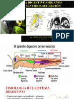 clase organos de los sentidos  6.pptx
