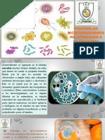 Principales microorganismos relacionadas a los alimentos