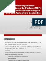 Microorganismos solubilizadores de fosforo final