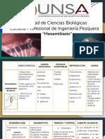 exposicion hexamitiasis (1)