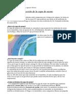 Biología - Capa de ozono (Informe)