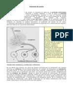 205421_15_vJpwVI1R_potencialdeaccion (1)