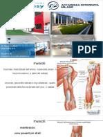 DOTT.-BUZZI-ANATOMIA-MUSCOLOSCHELETRICA_MUSCOLI-A.S..pdf
