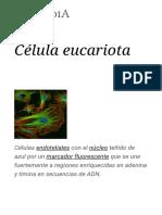 Célula eucariota - Wikipedia, la enciclopedia libre (1)