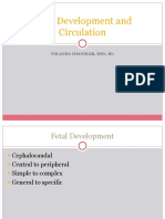 Development and Circulation of the Fetal