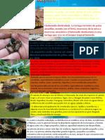 Reptiles 1 (1)