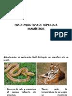 3.-Paso-Evolutivo-de-reptiles-a-mamiferos (1)