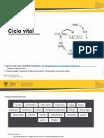 Guide 1. Life cycle.en.es