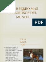 TOP 10 PERROS MAS PELIGROSOS DEL MUNDO.pptx