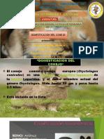 ETOLOGIA.pptx