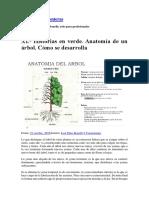 anatomía del árbol.pdf