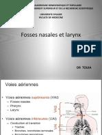 fosse-nasale-et-larynx.pptx