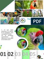 Papagayos^J loros y periquitos.pdf