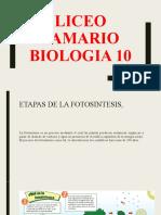 etapas_de_la_fotosintesis_profesor