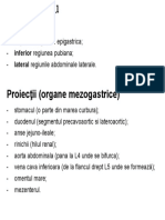 Mezogastru.docx