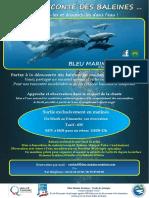 Info baleines