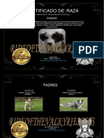 CERTIFICADO DE RAZA BORDER COLLIE