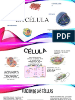 LA CÉLULA act1