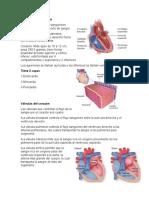 Sistema cardiocircular