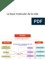 6687072_basemoleculardelavida