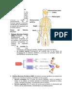 Tema 2 El Sistema Nervioso