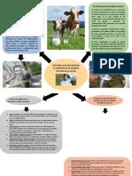 Factores que influencian en el contenido de solidos totales de la leche