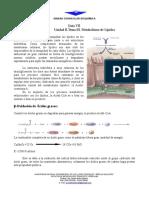 Guia VII. Metabolismo de Lípidos.pdf