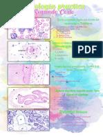 histologia  Practica PLACAS