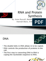 RNA Protein Synthesis