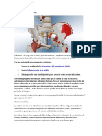 La biomecánica de la cadera