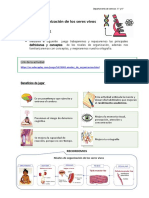 5° Ciencias  - Crucigrama - Niveles de organización de los seres vivos