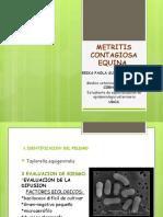 METRITIS CONTAGIOSA EQUINA u.pptx