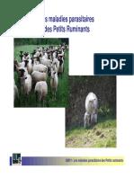 les maladies parasitaires chez les ruminants.pdf