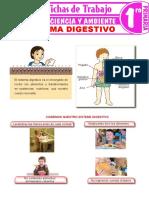El-sistema-digestivo-para-niños-para-Primer-Grado-de-Primaria