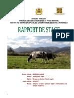 Rapport Bovins et Cultures fourragères (Ouahid).pdf