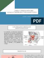 Anatomía y fisiología del aparato reproductor masculino