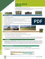 cultivo  de espinaca.pdf