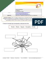 3°Básico - Cs. Naturales - Partes de la FLOR (Guía).pdf