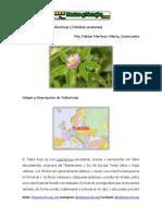 Ficha Técnica del  la Leguminosa Trébol Rojo (Trifolium pratense)
