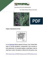 Ficha Técnica de La Leguminosa Vicia (Vicia atropurpurea)