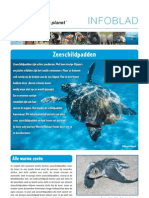 zeeschildpadden_spreekbeurt_wnf