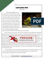 6th-leaf-cutter-ants