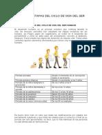 PERIODOS Y ETAPAS DEL CICLO DE VIDA DEL SER HUMANO.docx
